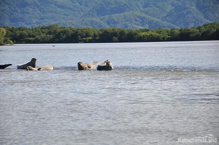 озеро Нерпичье и нерпы на Камчатке