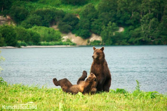 медвежья территория