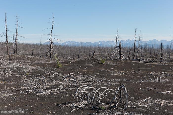 Мертвый лес скачать торрент